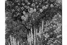 Sue Scullard engravings / My own engravings