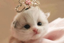 Gatti / Sensibile e amabili tanto quanto i cani!:-)