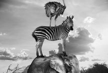 Surreal Scenes of African Animals Playfully Living Life /  Surreal Scenes of African Animals Playfully Living Life
