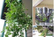 plantando em casa