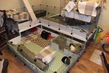 C and C Guinea Pig Cage Ideas