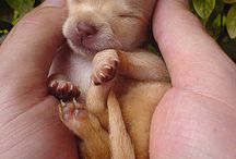 Cutest dogs ever / Really cute dogs