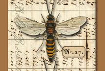 Bee Inspired / by Lisa Sommers