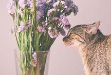 Gatos e mais gatos