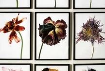 flowers / by Daniela Salerno
