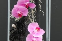 Hanging Flower Baskets / Welcome to the dream-yard.com Pinterest board for hanging flower baskets. Hanging baskets are a great way to add a vertical dimension of color and interest in your yard. Flower baskets and hanging pots compliment porches, fences, and entryways.