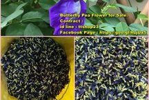 Butterfly Pea For Sale