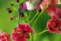 Lepkék virágok