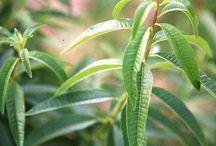 Herbs / by Sharon Grey