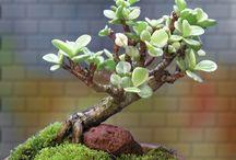 succulents eleni valatsou