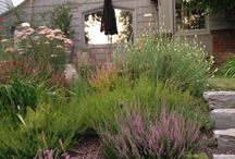 Garden/yard / by Jessica Calderon