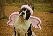 Pit Bulls Playing Dress Up / by Sherri Webster