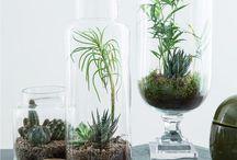 Planterrarium