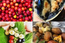 NZ Foraging Tours