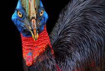 Rare animals / by Danielle Smith