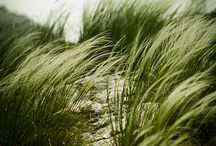Gardening; Gräs