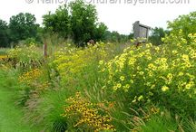 Helianthus Combinations / Plant partnerships that include perennial sunflowers