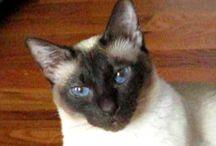 katten filmpjes / katten en hun gedrag