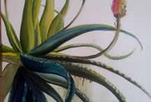 Aloes and Red Hot Pokers