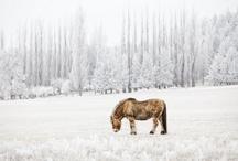 Ranch Winters