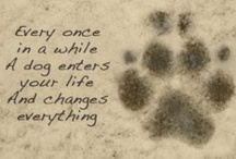 To the Dogs in our Life
