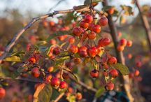 Plants and ideas for a winter Garden