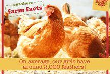 Fun Farm Facts