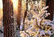 Winter Wonderland ❄️