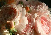 Roses / by Rebekah Blow