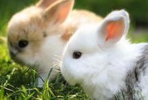 Rabbits... / by Margaret Mejid