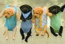 I love puppies!!! / by Kristin Harris
