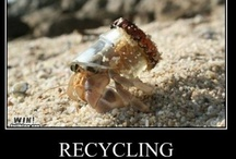 Eco humor