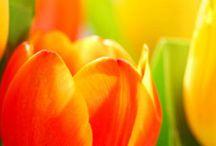 For the Garden / by Tiffany Simpson Jorgensen