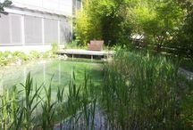RABAGS Schwimmteich / Planung und Bau von RABAGS  Schwimmteichen und Naturpools