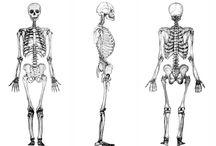 Anatomía / La anatomía de nuestro cuerpo humano en fotos para así conocerlo más en profundidad
