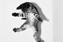Furry Friends / by Ashley Renae
