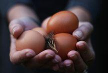 Any Eggcuse