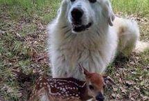 他の動物同士に和む