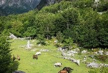 Countries: Albania