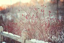 In the Bleak Midwinter / Frosty winds,water like a stone-Seasonal stylings