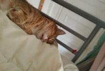 titillé chat