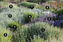 kombinace rostlin schemata