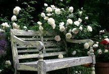 záhrada - ruže