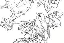 vogeltjes tekenen