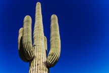 Arizona / by Colleen Love