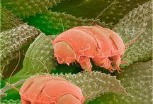 mondo microscopico