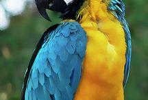 ''Polly want a cracker?'' / ''Parrots have gone a bit quiet since pirates have gone.''  Karl Pilkington