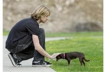 Animal Rescue / by Alberta Veterinary Medical Association