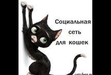 Кошки - УЛЫБНИСЬ ! Cats - SMILE!