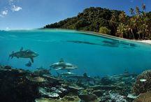 Underwater / Подводный мир